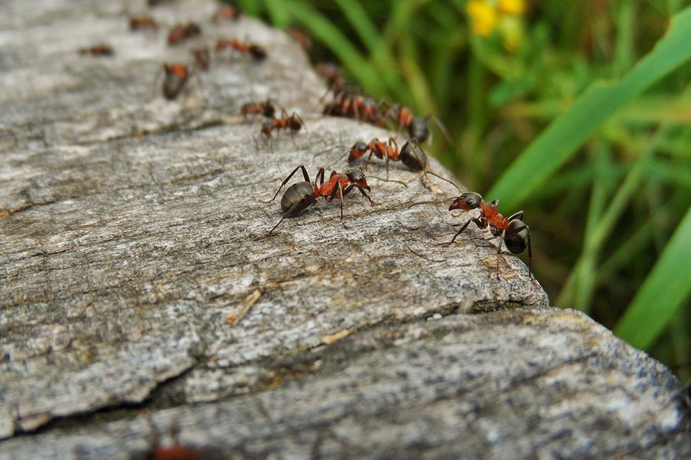 Gott schickt Ameisen