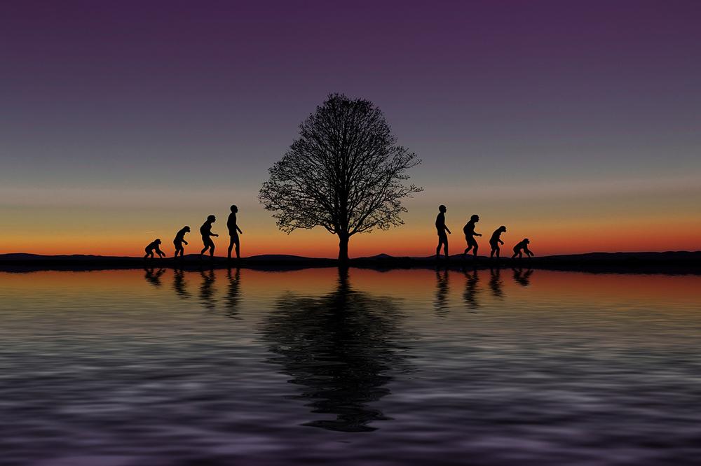 Evolutionstheorie als Gegenbeweis für Gott?
